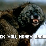 BLACK WOLF VS. HONEY BADGER