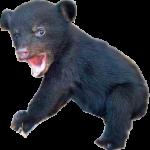 Shocked Little Bear