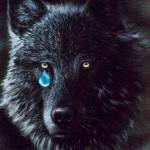 Honey Badger vs. Black Wolf 5