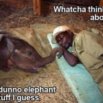 elephant stuff