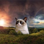grumpy cat - no mountain