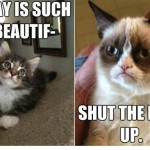 grumpy cat vs happy cat