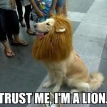 im a lion