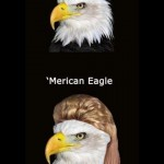 merican eagle